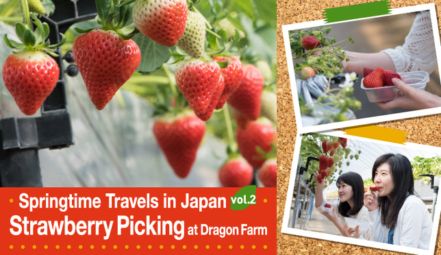 Strawberry Picking at Dragon Farm!