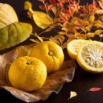 Yuzu, Japan's Favourite Citrus Fruit