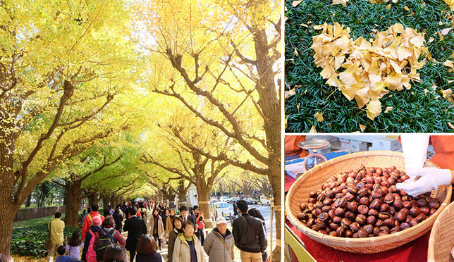 A Photo Report From Icho Namiki Avenue, a Must-Go Spot for Autumn Leaves in Tokyo