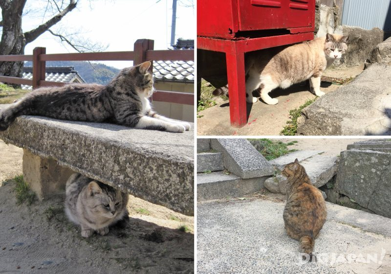 尾道街頭的貓咪