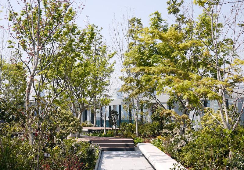 感受東京四季變遷的各種植物