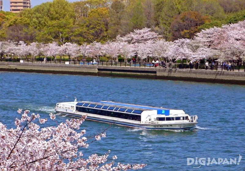 春天兩岸將會被染成櫻花色,特別的美麗