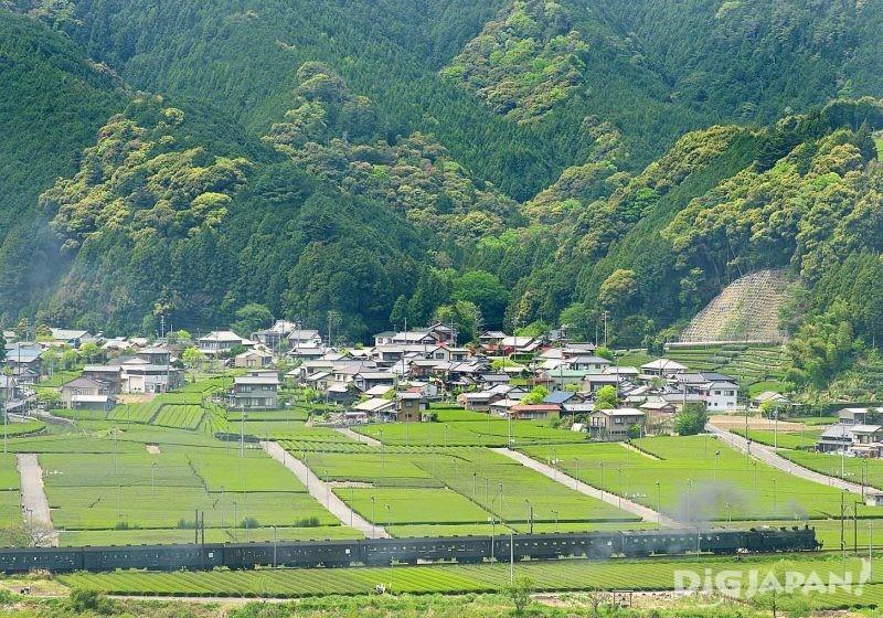 行走茶田間的大井川鐵道SL車輛