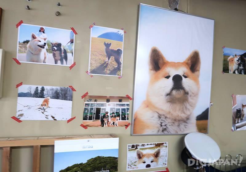 室內有很多秋田犬相片