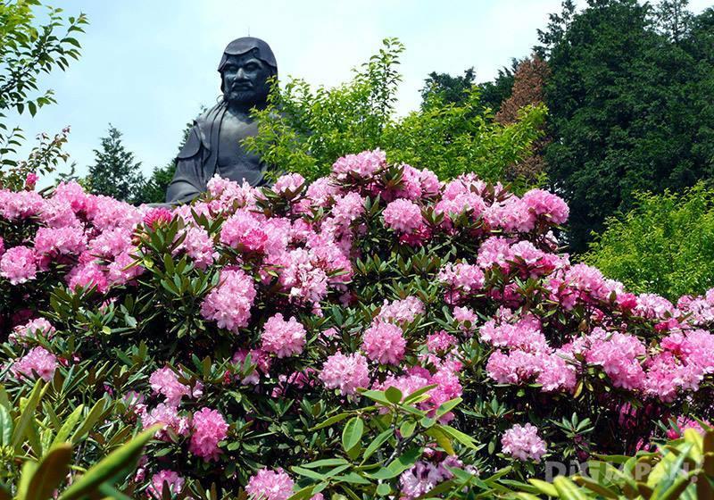 將鳳台院染成紅色及粉紅色的西施杜鵑花