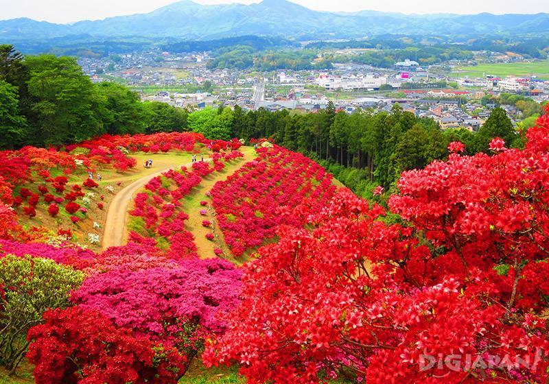 笠間杜鵑花祭