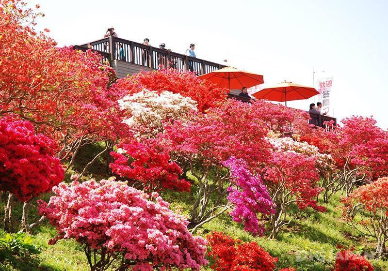 笠間杜鵑花祭5