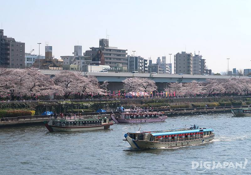 The cherry blossoms on the river bank can be admired from late March to mid-April.