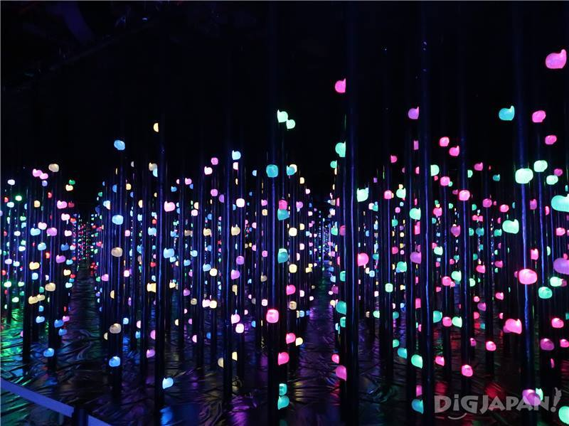 Light Forest Three-dimensional Bouldering